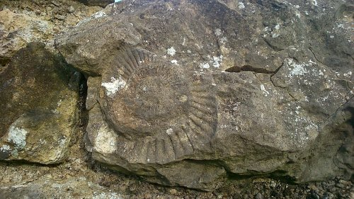 Ammonite fossils are commonly found in Yorkshire and we found this one in the stones used for the building